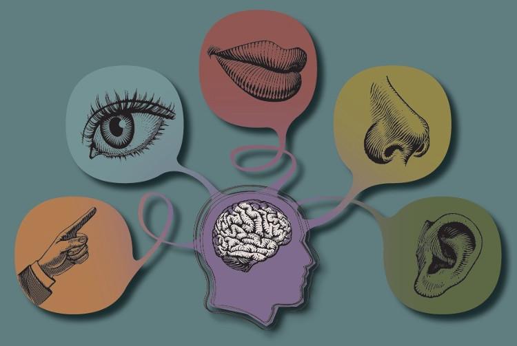 Nguyên tắc về năm giác quan của con người có nguồn gốc từ thời Hy Lạp cổ đại.