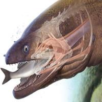 """Kinh dị """"quái vật"""" biển săn mồi như động vật ngoài hành tinh"""