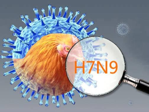 Trước khi hoành hành gây chết người ở Trung Quốc, virus cúm A/H7N9 chưa từng gây bệnh ở người