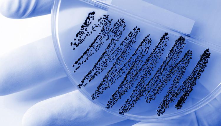 Các nhà khoa học tìm ra một kháng sinh mới khi nghiên cứu kiến ở Châu Phi.