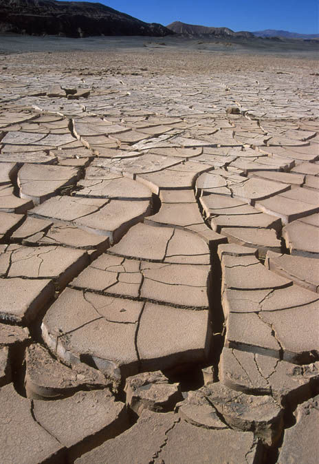 Tuy nhiên, các nhà khoa học vẫn tìm thấy nhiều sinh vật thích ứng với cuộc sống khắc nghiệt ở sa mạc Atacama.