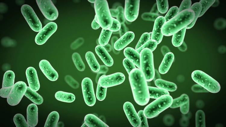 Khả năng kháng kháng sinh của vi khuẩn là do nó đã có sự biến đổi trong gene mã hóa các thành phần ribosome.