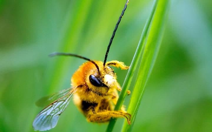 Loài ong có thể học hỏi và rèn luyện một kỹ năng mà không liên quan trực tiếp đến nhiệm vụ chính của chúng.