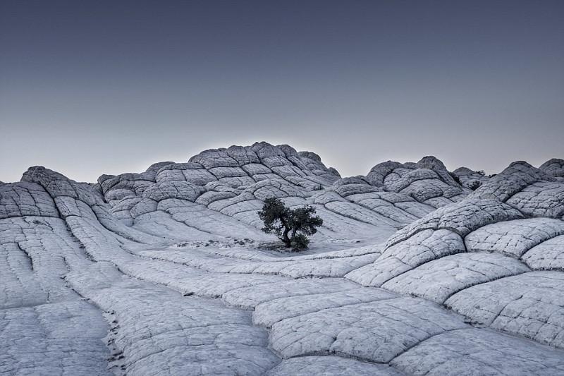 Trong bức ảnh này, một thân cây cô độc đứng giữa một biển đá màu xám.