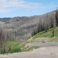 """Hơn 800 triệu cây rừng ở Mỹ """"đột tử"""" vì """"sát thủ hàng loạt"""" nhỏ bé"""