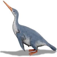 Chim cánh cụt khổng lồ có thể đã sống cùng thời với khủng long