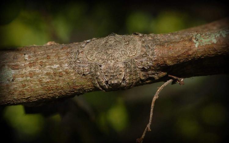 Loài nhện này có khả năng tàng hình cực đỉnh.