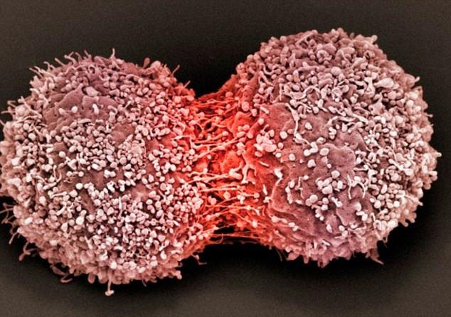Mỗi người đều có các tế bào ung thư trong cơ thể.