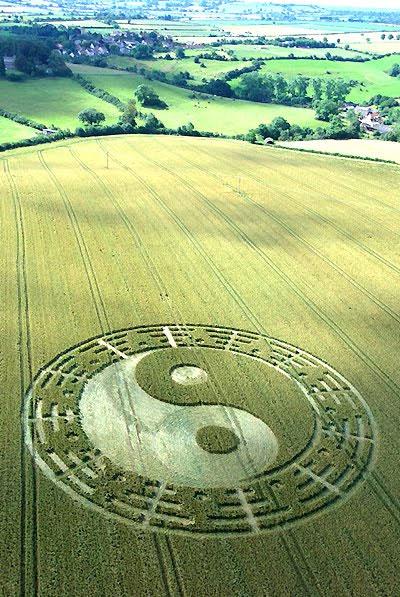 Một vòng tròn lúa mì được tin là thông điệp của người ngoài hành tinh gửi đến con người.