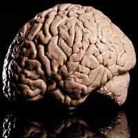 """Công trình về """"cơ chế giải thưởng"""" trong não đoạt giải 1 triệu Euro"""
