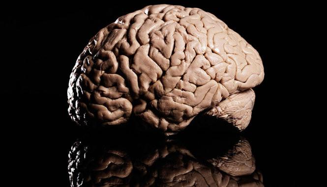 Chất dopamine đóng vai trò lớn trong việc giúp bộ não đưa ra quyết định