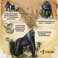 """""""Kong: Skull Island"""": Kong to lớn tới mức nào ở ngoài đời thật?"""