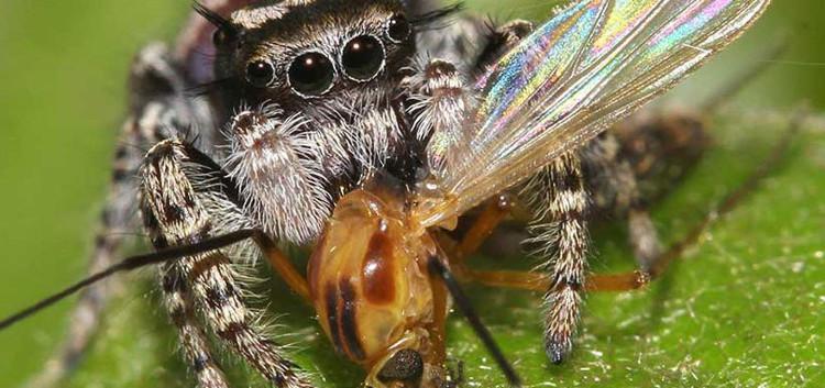 Cùng với các loài như chim hoặc kiến, nhện giúp mật độ các loài côn trùng giảm đi đáng kể.