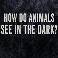 Video: Động vật nhìn thấy trong bóng tối như thế nào?