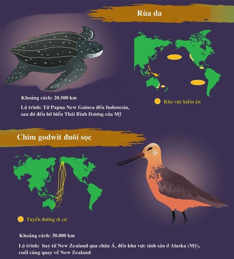 Khoảng cách di cư của rùa da là 20.500km.