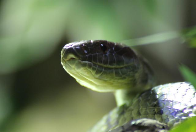 Ở Ireland, nhiều người đã đặt mua rắn về làm vật nuôi.