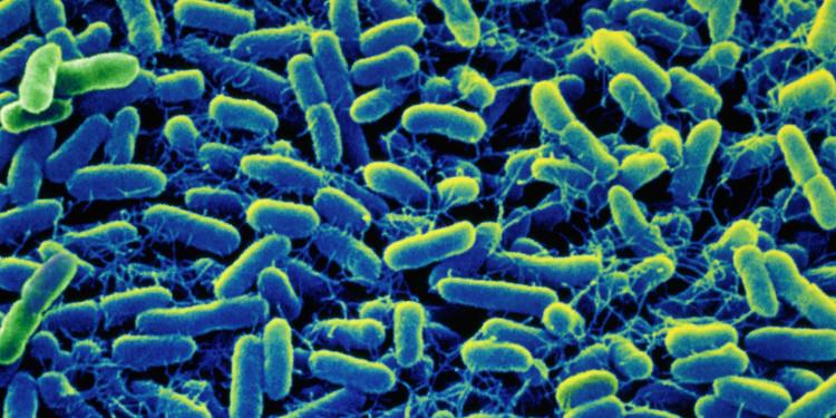 Thương hàn là sự nhiễm khuẩn Salmonella ở bao tử và ruột.