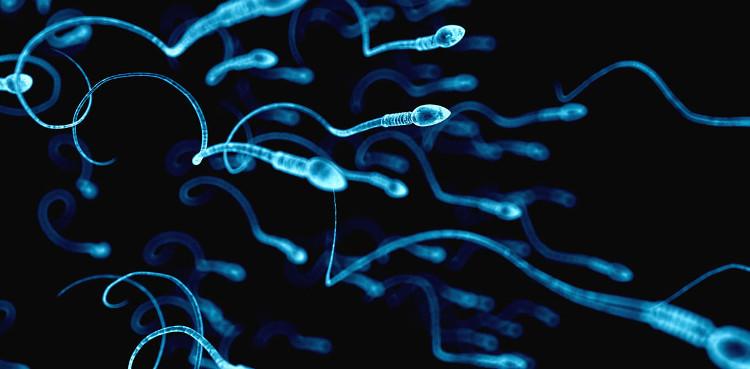 Chuyển động tiến rồi lùi nhịp nhàng cho phép tinh trùng có thể bơi đã có thể được giải thích bằng một công thức toán học.
