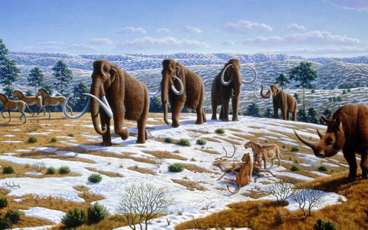 Nhiều loài động vật không hề có tổ tiên