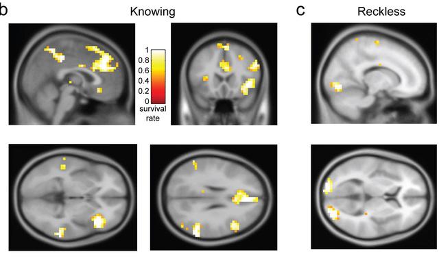Máy tính chỉ ra sự khác biệt của não những người thực hiện hành vi tội phạm có chủ ý và vô ý