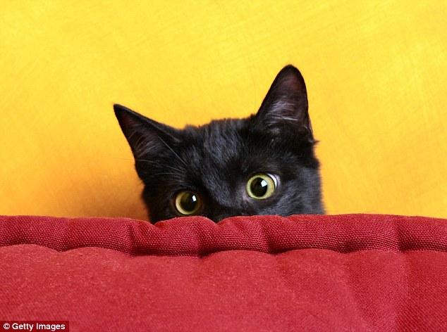 Mèo có xu hướng co rúm người lại