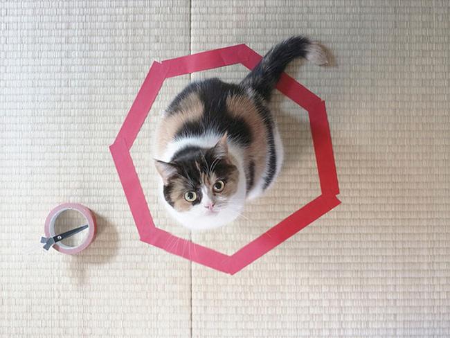 Mèo bị ám ảnh bởi sự sở hữu lãnh thổ