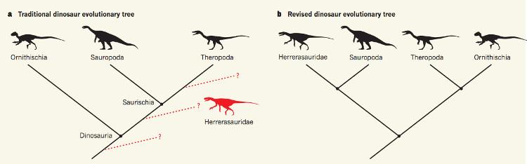 Cây phả hệ của loài khủng long: truyền thống (trái), được viết lại (phải).