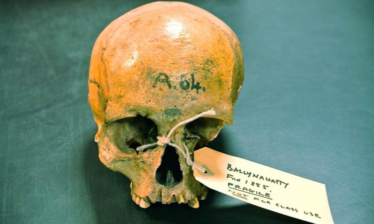 Nguồn gốc của người Ailen có thể được tìm thấy trong một người phụ nữ và thời kỳ đồ đá.