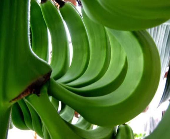 Chuối xanh (nấu chín) với vỏ có thể cung cấp cho bạn các chất chống oxy hóa tuyệt vời.