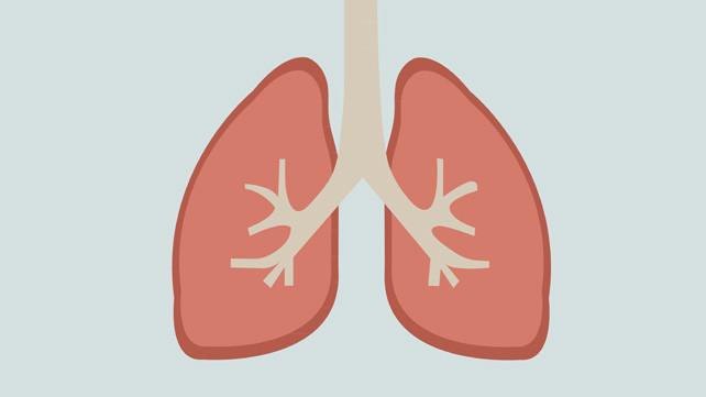 Ít nhất một nửa lượng tiểu cầu của cơ thể đến từ phổi.