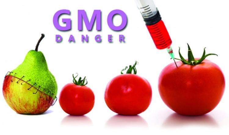 Nhiều GMO có nghĩa là sử dụng nhiều chất hóa học hơn.