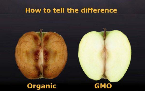 GMO không như quảng cáo