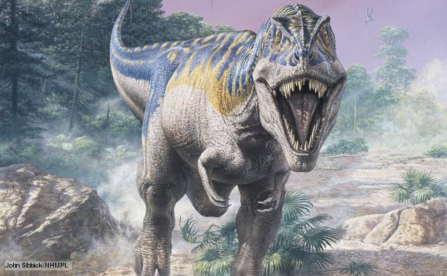 Khi tán tỉnh, khủng long bạo chúa có thể cọ chiếc mũi nhạy cảm vào nhau