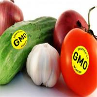 Thực phẩm biến đổi gene vào Việt Nam từ bao giờ?