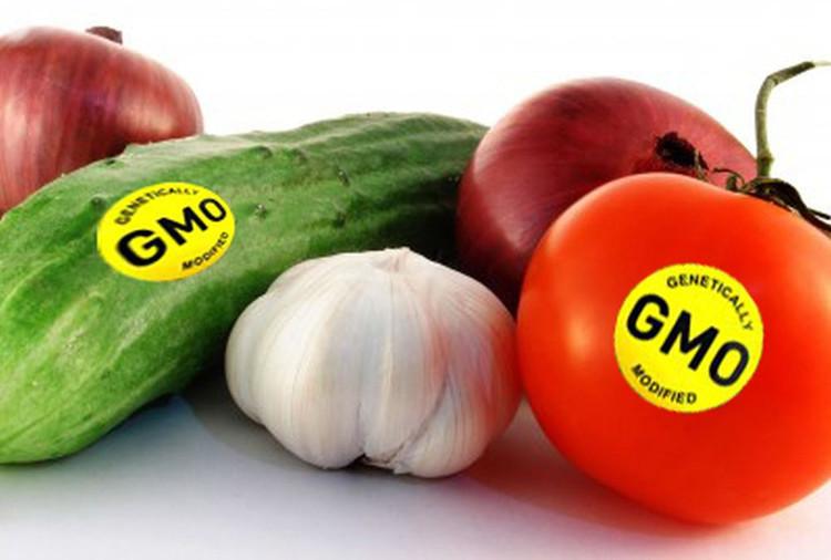 Những loại thực phẩm biến đổi gene GMO hiện đang rất phổ biến trong nông nghiệp trên thế giới.