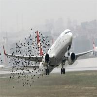 Thế giới làm gì để hạn chế tai nạn hàng không do chim chóc?