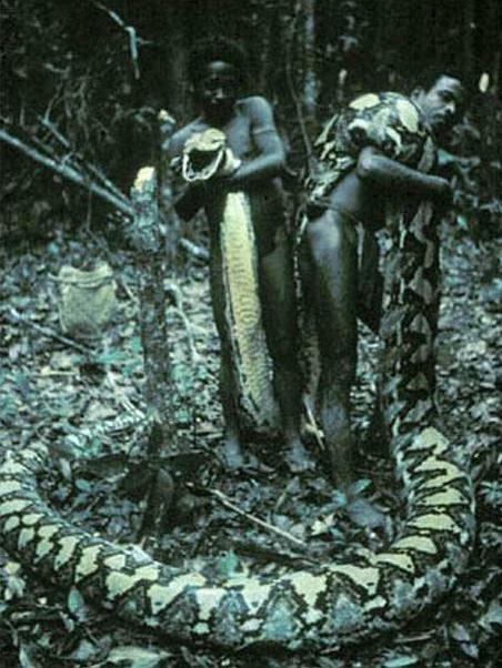 Con trăn dài thứ 3 lịch sử được ghi nhận.