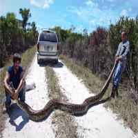 Giây phút kinh hoàng thợ săn bắt trăn khổng lồ dài 4,5m