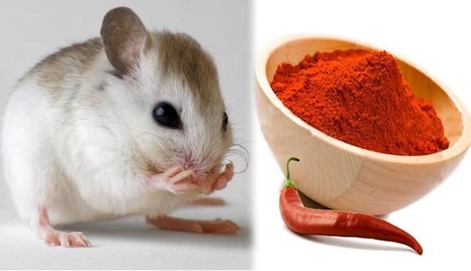 Pha bột ớt với nước rồi dùng bình xịt phun dung dịch này khắp sân vườn, đặc biệt ở những nơi bạn nghi là hang ổ của chuột.