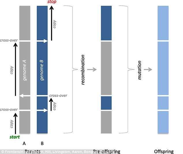 Các nhà nghiên cứu dùng thuật toán ghép đôi ngẫu nhiên cho phép trao đổi vật liệu di truyền từ quỹ gene tạo thành từ mã nhị phân