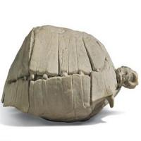 Hóa thạch rùa 33 triệu năm quý hiếm trị giá hơn 4.000 USD