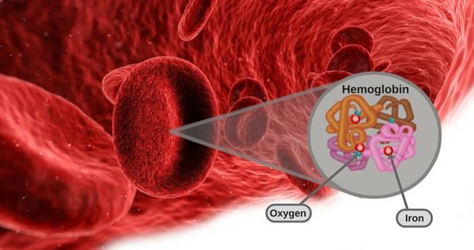 Phân tử carbaminohemoglobin hình thành khi carbon dioxide liên kết với hemoglobin.