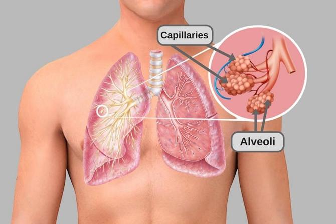 Carbon dioxide hòa tan trong máu người nhiều hơn oxy.