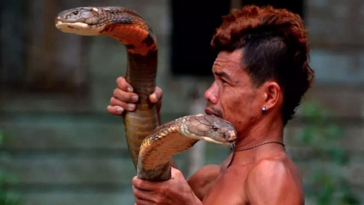 Roni chơi đùa với hai con rắn hổ mang.