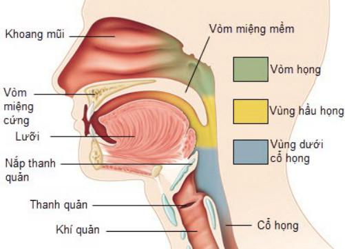 Nhiễm virus EBV được cho là nguyên nhân phổ biến gây ung thư vòm họng