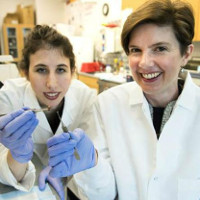 Bước tiến y học khiến nhân loại mừng rỡ: Vá tim bằng công nghệ 3D