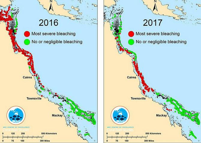 Các rạn san hô đang phải vật lộn với nhiều hơn các tác động bủa vây.