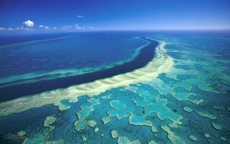 Sẽ mất nhanh nhất khoảng một thập kỷ để toàn bộ rạn san hô có thể phục hồi.