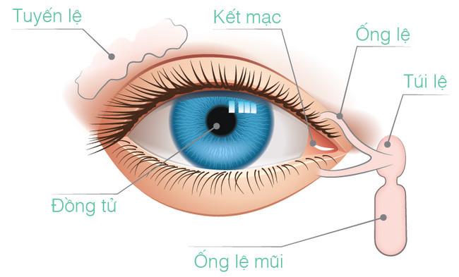 Những tia sáng mạnh có thể đi sâu vào mắt, gây tổn thương cho võng mạc.