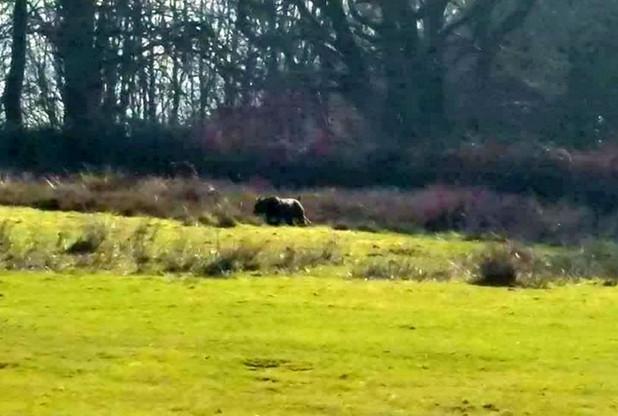 Sinh vật giống báo đen được chụp tại Somerset.